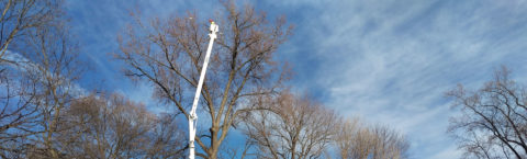 Tree pruning is our #1 requested service.